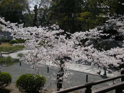 京都 - 7